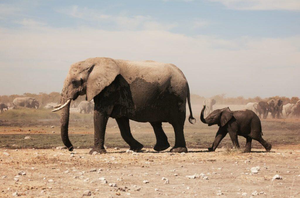 Kahlitun norsun tarina  – tarina lamauttavista uskomuksista
